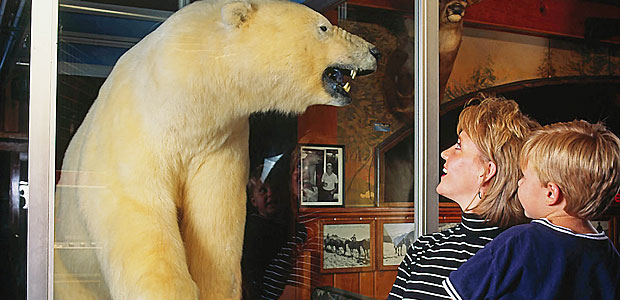 ole's bear